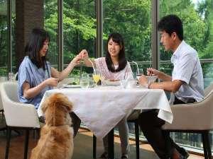八ヶ岳わんわんパラダイス:レストラン『ラ・テラス』では、わんちゃんも同伴いただけます。