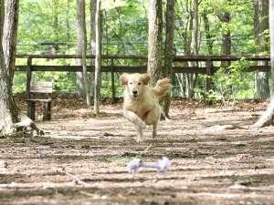 八ヶ岳わんわんパラダイス:森の木々に覆われて暑い日でも快適に遊べる森のドッグラン