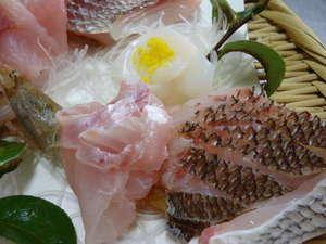 かに 荒磯料理 志麻:春≪鯛≫≪ハチメ≫いちばん美味しい時期です。