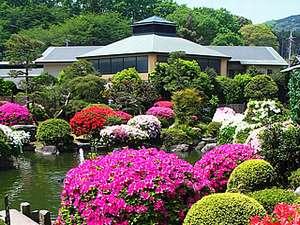 4月中~5月上に本館日本庭園を染め上げるつつじ群落。必見です。