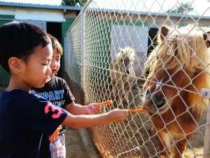 AJリゾートアイランド伊計島:動物ふれあいコーナー♪エサやり体験☆