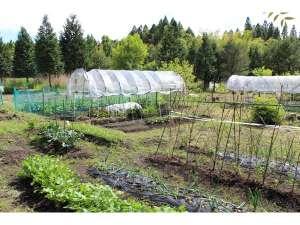 ペンション 草原の風:草原の風ファーム~自家製野菜続々栽培中。