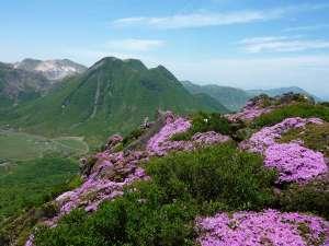 ペンション 草原の風:6月はミヤマキリシマトレッキングに。