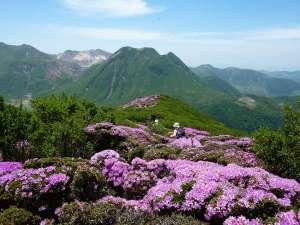 ペンション 草原の風:美しいミヤマキリシマの景色。