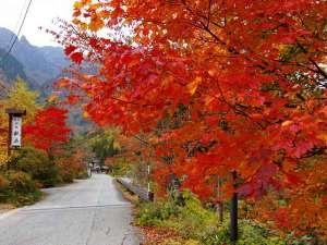 旅館 観岳:観岳の玄関前の紅葉。10月中旬~11月初旬が見頃です。