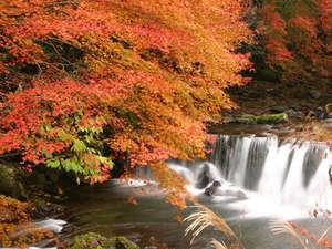■藤木川は秋にはもみじが真っ赤に染まります
