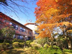 四季を愉しむ貸切温泉 ゆとりろ庵:紅葉に染まる自然庭園の木々