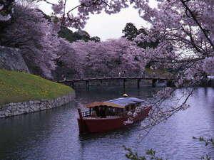 彦根城巡り屋形船~お花見~