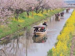 近江八幡の水郷めぐり