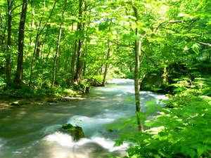 スーパーホテル十和田 天然温泉 奥入瀬の湯:*千変万化の美しい流れや様々な奇岩・奇勝が見事な渓流美を作り、四季折々の自然美を堪能できます*