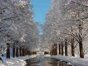ペンション くりっこ:15 冬のメタセコイヤ並木