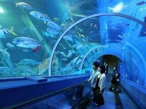 楽しさいっぱいの横浜・八景島シーパラダイス