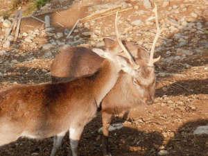 ふれあいの里 鹿鳴園:*【鹿園】かわいい鹿達も皆様のお越しをお待ちしています