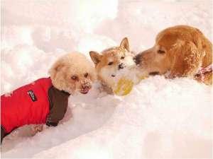 ステラフェリス本館:目の前のドッグランで小型犬から大型犬まで思いっきり楽しめます♪