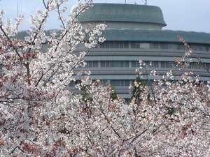 グランドプリンスホテル京都:桜に包まれた春の風景。自然あふれる洛北ならではの美しい景色が、ここにはあります。