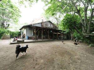 石窯ピッツァのおいしい宿 フラワーガーデン:広々としたドッグラン兼お子様の遊び場です!