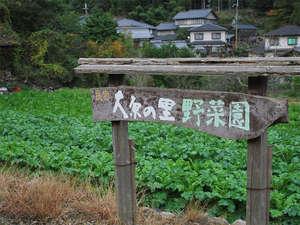 大原温泉 湯元 京の民宿 大原の里