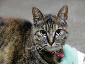 朝夕個室食と貸切風呂の宿 花巻台温泉 松田屋旅館:別館の館内に猫がいます。会いましたら宜しくお願いします。