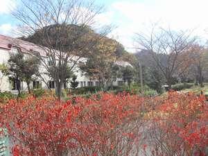 お散歩コースでは円山川沿いの景色をゆったりと眺めて