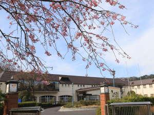 自然あふれる静かな宿「桜とひだまり」