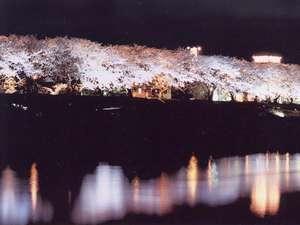 ホテル前の足羽川に映える夜の桜並木ライトアップ1