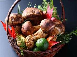 岩村山荘:秋の味覚の王様「松茸」 毎秋、松茸料理プラン、ご用意しています。