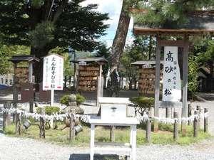 阿蘇神社「えんむすびの松」