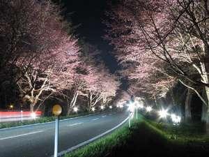 優駿ロードの桜並木(夜桜)