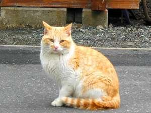 いつのまにか住み着いた猫。その名もディープコンパクト♪
