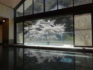 中川温泉 かくれ湯の里 信玄館:大浴場からの桜