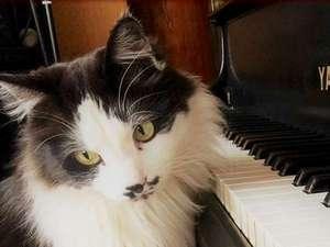 Real country inn Speak Easy:【隠れ家の楽しみの1つ】猫スタッフのおもてなしが好評♪instagram『伊豆熱川スピークイージー』も見てね