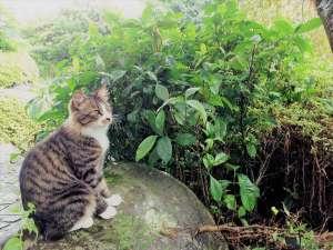 Real country inn Speak Easy:3匹の気まぐれ猫スタッフ達の可愛らしいおもてなし♪ Instagram『伊豆熱川スピークイージー』も見てね☆