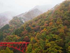 ☆紅葉×トロッコ列車☆当館からは綺麗にご覧頂けます(^^♪