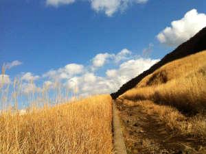 仙石原温泉 福島館:*【周辺観光地】仙石原すすき草原