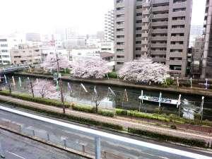 ホテルサンプラザ堺ANNEX:客室から眺める桜と環濠クルーズ