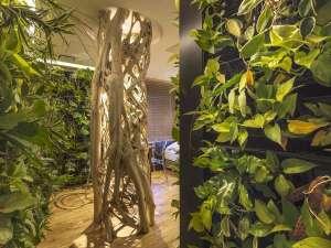 HOTEL THE Grandee心斎橋(ホテル ザ グランデ心斎橋):711号室/西畠清順氏プロデュースの壁面緑化ルーム。バリ島の『アコウ』の木がそびえ立つ。