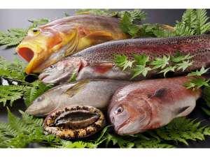 【お料理】木更津魚市場から直送の新鮮なお魚