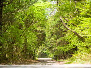�R�g���� �k���X�^�C�� forest inn BORN�F�y���̑��z�X�̒��ŐV�N�ȋ�C���z������ŁE�E�E