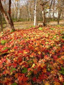 きらの宿すばる:紅葉シーズン到来!