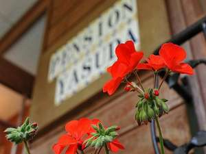 ヤスペンを象徴する花 ゼラニューム