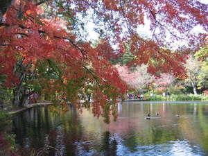ペンション バンビ:紅葉に染まる雲場の池