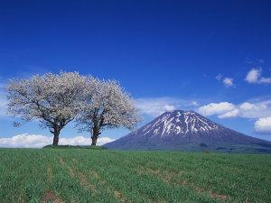 ニセコセントラル 山自然