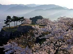【竹田城跡でお花見】写真提供:吉田利栄