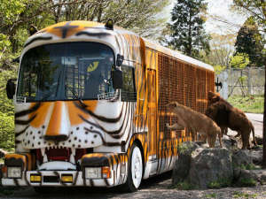 富士サファリパーク(ホテルから車で約40分)