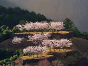 入鹿温泉ホテル瀞流荘 :赤木城跡の桜