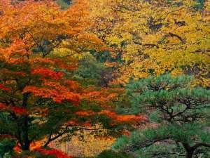 秋の紅葉は10月後半から