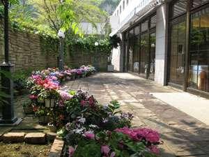 レストラン・ペルゴーラの中庭は季節の花がお楽しみいただけます
