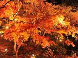 鎌倉パークホテル:鎌倉紅葉