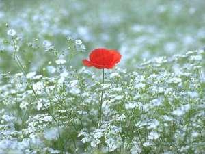 リゾートイン ノースカントリー:春の訪れを感じる一輪の花