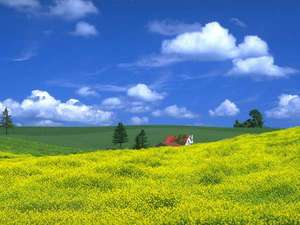 リゾートイン ノースカントリー:花の息吹を感じる春